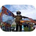 Giant Bogong Moth-1