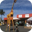 Gemma Giraffe and Ranger Stilt Walkers