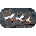 Acrobats - TSU Handstands-3