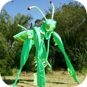 MANTIS STILT WALKERS  (VIC / NSW)-1