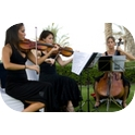The String Collective - String Quartet