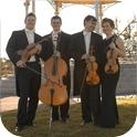 Vivente Strings-1